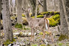 Wildlife In Harrington Beach State Park in Belgium Wisconsin royalty free stock photography