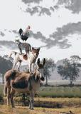 Wildlife, Herd, Donkey, Sky Stock Photos
