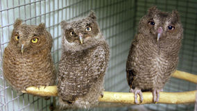Wildlife hospital stock image