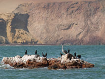 Wildlife on Islas Ballestas in Peru Stock Photo