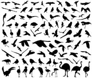 Wildlife isolated birds big vector collection Royalty Free Stock Photography
