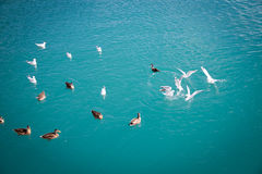 Wildlife at Lake Wakatipu Stock Images