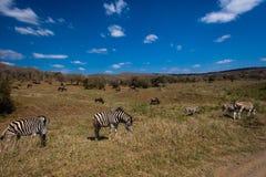 Wildlife Landscape Animals Royalty Free Stock Photography