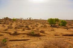 Wildlife landscape near Laisamis in Kenya Stock Images