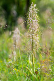 Wildlife Lizard Orchid Stock Photo