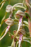 Wildlife Lizard Orchid Stock Photos