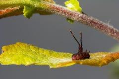 wildlife macrocosm красивейшие насекомые Черепашки, пауки, бабочки и другие красивые насекомые Стоковое Изображение RF