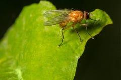 wildlife macrocosm красивейшие насекомые Черепашки, пауки, бабочки и другие красивые насекомые стоковые фотографии rf
