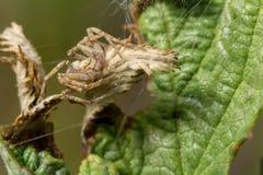 wildlife macrocosm красивейшие насекомые Черепашки, пауки, бабочки и другие красивые насекомые стоковые фото