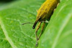 wildlife macrocosm красивейшие насекомые Черепашки, пауки, бабочки и другие красивые насекомые Стоковая Фотография RF