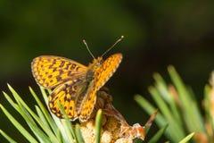 wildlife macrocosm красивейшие насекомые Черепашки, пауки, бабочки и другие красивые насекомые Стоковое Изображение