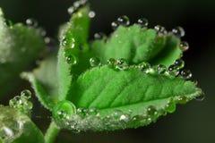 wildlife macrocosm Падения росы на красивых цветках Разрывы, предпосылки Стоковое фото RF