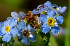 wildlife macrocosm Падения росы на красивых цветках Разрывы, предпосылки стоковая фотография