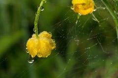 wildlife macrocosm Падения росы на красивых цветках Разрывы, предпосылки Стоковое Изображение RF