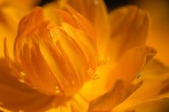 wildlife macrocosm Падения росы на красивых цветках Разрывы, предпосылки стоковые изображения