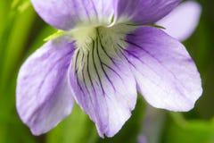 wildlife macrocosm Падения росы на красивых цветках Разрывы, предпосылки стоковые фотографии rf