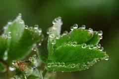 wildlife macrocosm Падения росы на красивых цветках Разрывы, предпосылки Стоковое Изображение