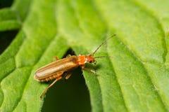wildlife macrocosm Insetos bonitos Erros, aranhas, borboletas e outros insetos bonitos imagens de stock royalty free