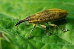 wildlife macrocosm Mooie insecten Insecten, spinnen, vlinders en andere mooie insecten royalty-vrije stock fotografie