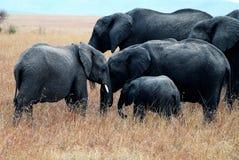 Masai mara Royalty Free Stock Photos