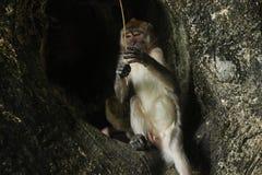 Wildlife monkey siting inside a hole royalty free stock photo