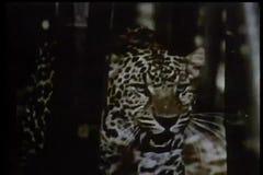 Wildlife montage stock video footage