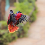 Wildlife, natural habitats in the wild. Royalty Free Stock Photos