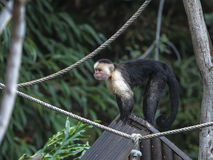Wildlife, natural habitats in the wild. Stock Photos