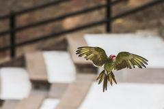 Wildlife, natural habitats in the wild. Royalty Free Stock Photo
