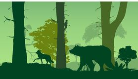 Wildlife nature silhouette, forest, bear, wlf, trees, green Royalty Free Stock Photos