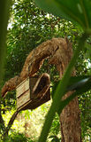 Wildlife nesting box in tree. Wooden nesting box in tree for birds and wildlife Stock Photography