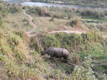 wildlife imagem de stock royalty free