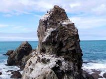Wildlife at Ohau Point, New Zealand Royalty Free Stock Image