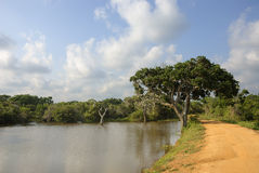 Wildlife Panorama. A wildlife panorama from Yala National Park, Sri Lanka Stock Photo