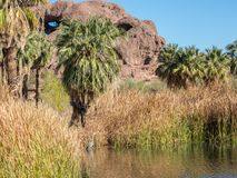 Wildlife, Papago Park, Phoenix, Arizona. Great Blue Heron and Hole in the Rock, Papago Park, Phoenix, Arizona Stock Photos