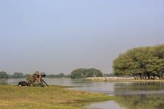 Wildlife Photographer Stock Photos