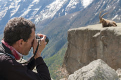 Wildlife Photographer. Nature photographer with digital camera on the mountains taking pictures of ibex. Gran Paradiso National Park, Italy Stock Photos