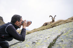 Wildlife Photographer. Nature photographer with digital camera on the mountains taking pictures of ibex. Gran Paradiso National Park, Italy Royalty Free Stock Photo