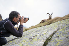 Wildlife Photographer. Nature photographer with digital camera on the mountains taking pictures of ibex. Gran Paradiso National Park, Italy Royalty Free Stock Photos