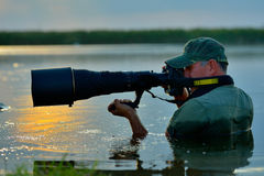 Wildlife photographer outdoor, standing in the water Stock Photo