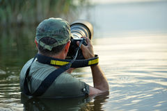 Wildlife photographer outdoor, standing in the water Royalty Free Stock Images
