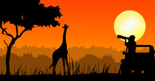 Wildlife photographer in sunset. Illustration of a wildlife photographer taking pictures from jeep of a giraffe in sunset scene Royalty Free Stock Photos