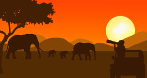 Wildlife photographer in sunset. Illustration of a wildlife photographer taking pictures from jeep of an elephant family in sunset scene Royalty Free Stock Image