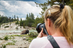Wildlife photographer in yellowstone Royalty Free Stock Images