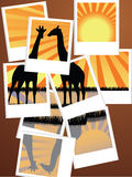 Wildlife photos. Vector illustration of photographs forming a wildlife landscape Royalty Free Stock Photo