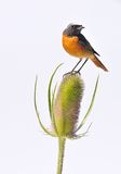Wildlife and plant isolated. Stock Photos