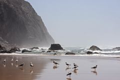 Wildlife in Portugal. With birds, rocks and ocean Royalty Free Stock Photos