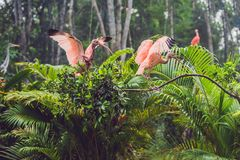 Wildlife and rainforest exotic tropical birds in a bird park.  Royalty Free Stock Images