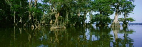 Wildlife Refuge at Lake Fausse Pointe State Park, Louisiana Royalty Free Stock Photography