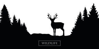 Wildlife reindeer silhouette forest landscape black and white vector illustration